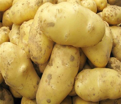 开封土豆价格,土豆价格,雪原农业科技优质种子