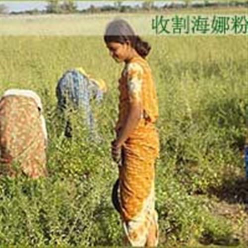 南京海娜粉|润奇公司(在线咨询)|海娜粉价格