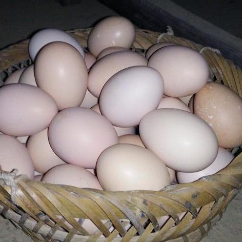 供应 新鲜草鸡蛋五谷杂粮喂养土鸡蛋